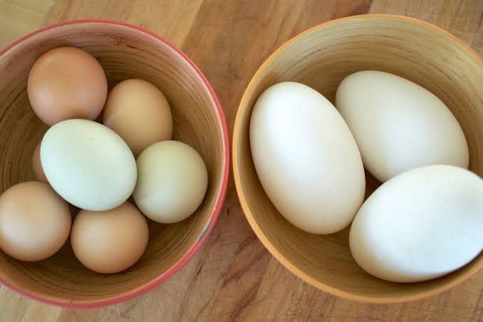 How Much Saturated Fat in Eggs Raw Goose?